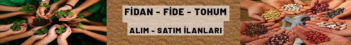 Fidan, Fide, Tohum İlanları
